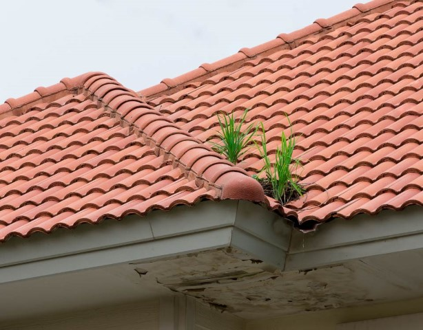Plante qui pousse sur le toit